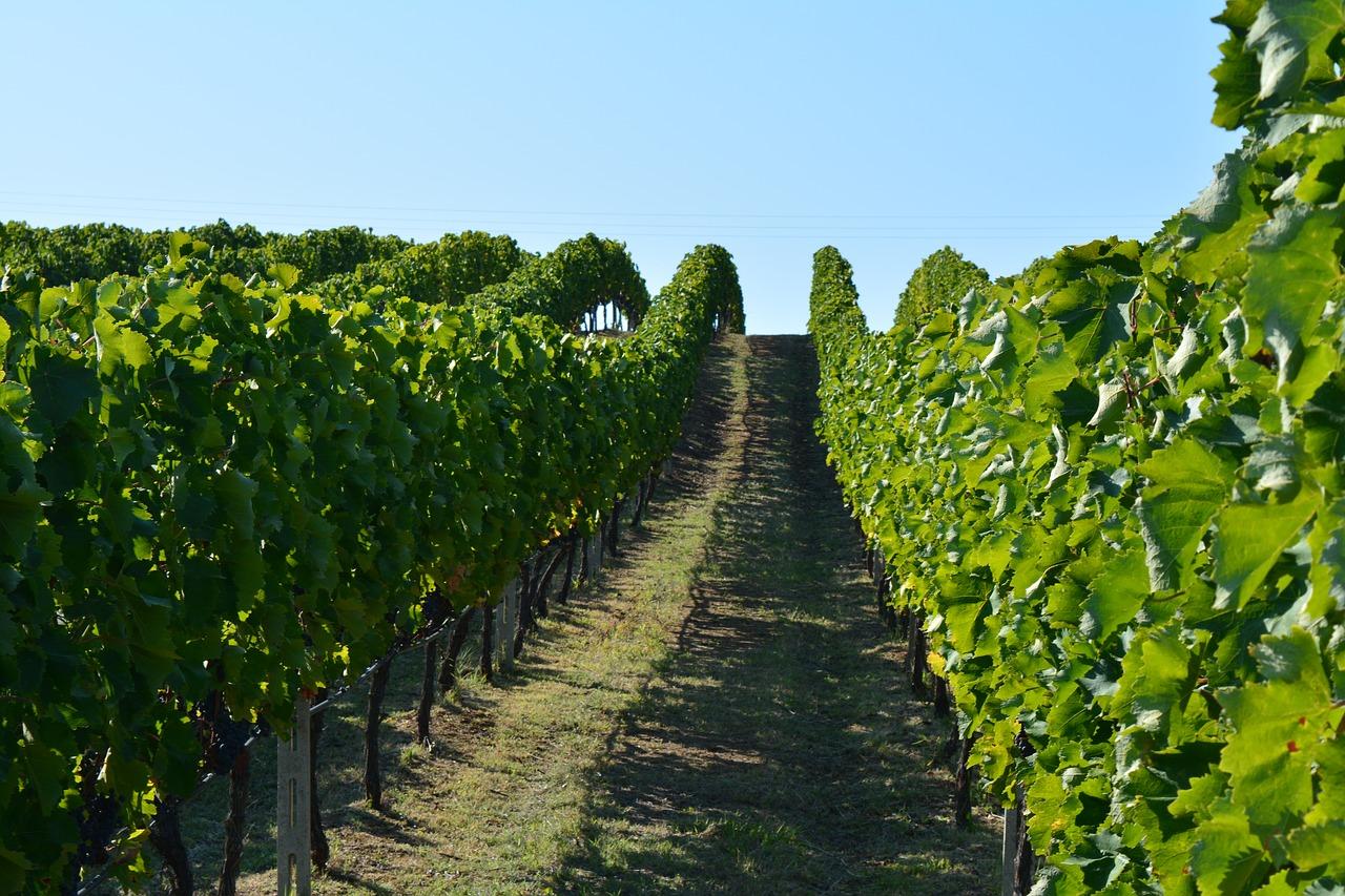 Wineries greece